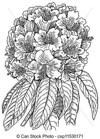 Rhododendron clipart #14, Download drawings