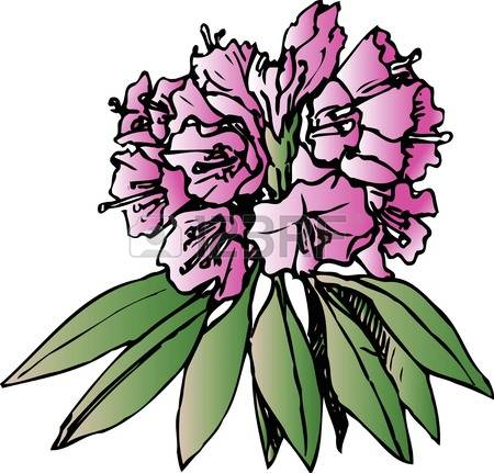Rhododendron clipart #13, Download drawings