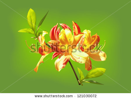 Rhododendrun svg #18, Download drawings