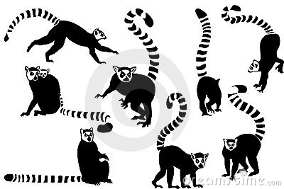 Ring-tailed Lemur clipart #16, Download drawings