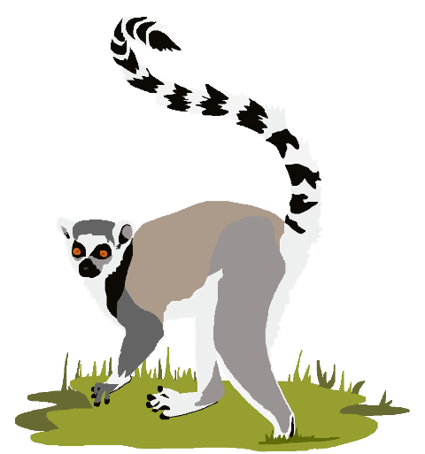 Ring-tailed Lemur clipart #20, Download drawings