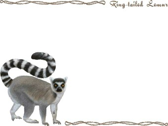 Ring-tailed Lemur clipart #11, Download drawings
