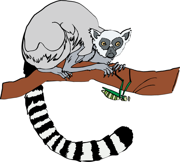 Ring-tailed Lemur clipart #15, Download drawings