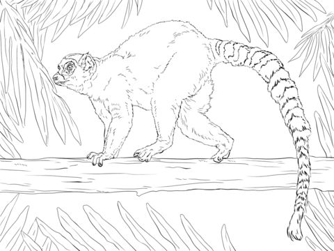 Ring-tailed Lemur coloring #14, Download drawings