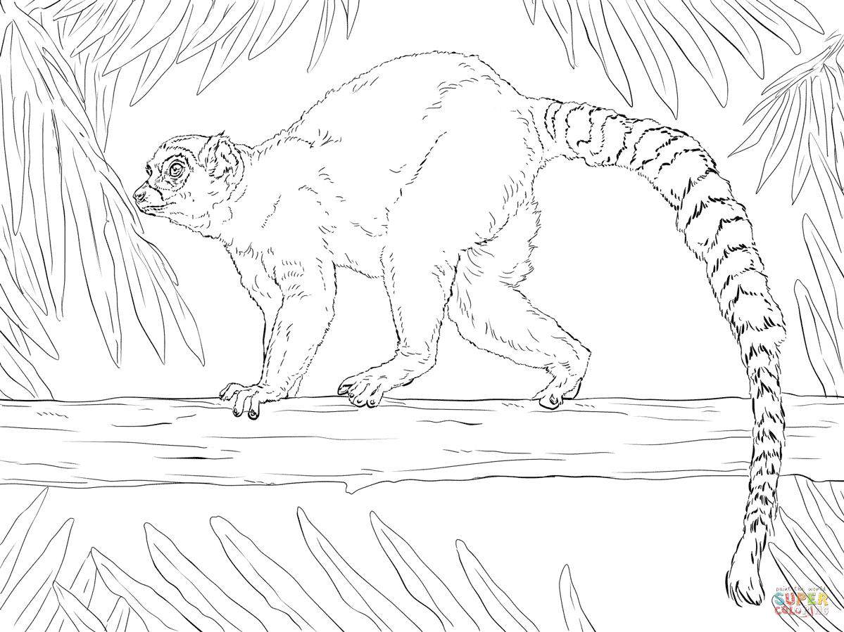 Ring-tailed Lemur coloring #8, Download drawings