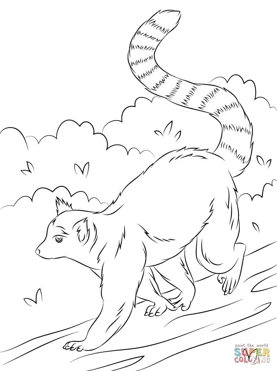 Ring-tailed Lemur coloring #6, Download drawings