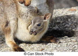 Rock Wallaby clipart #14, Download drawings