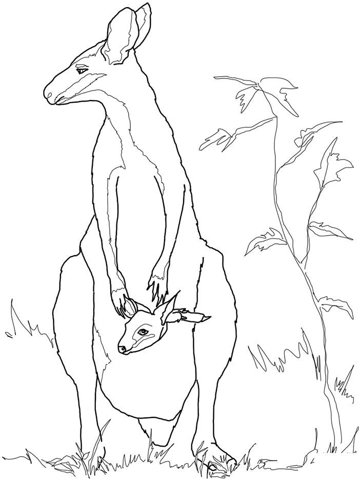 Rock Wallaby coloring #17, Download drawings
