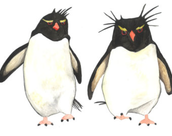 Rockhopper Penguin clipart #11, Download drawings