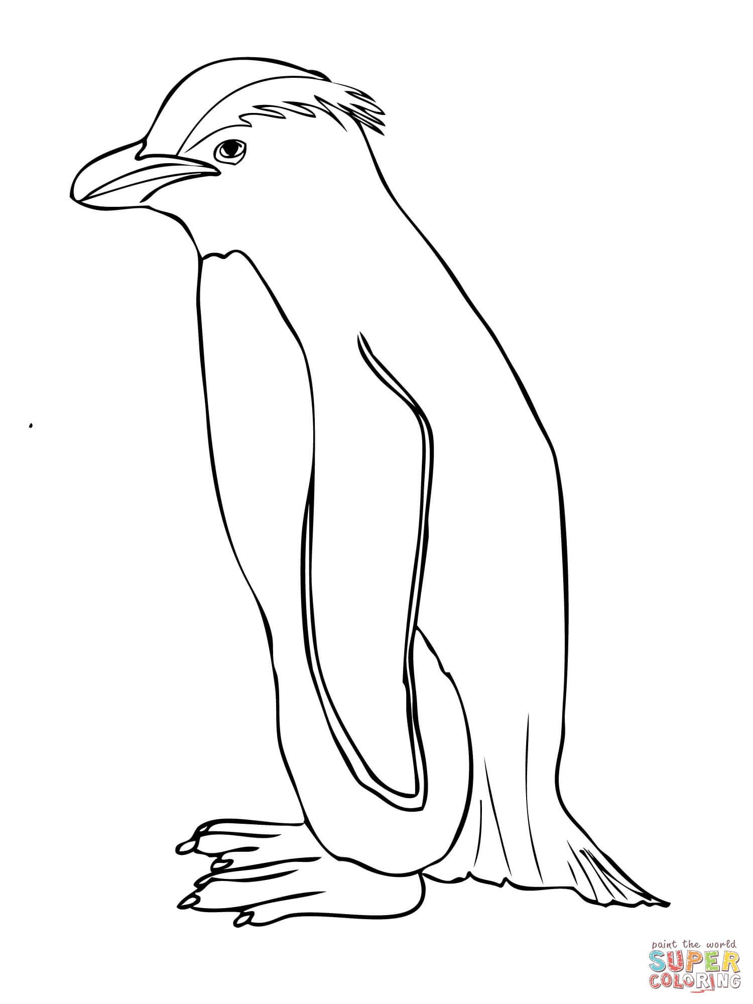 club penguin coloring pages of rockhopper exploration | Rockhopper Penguin coloring, Download Rockhopper Penguin ...
