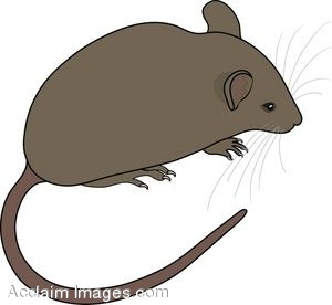 Rodent clipart #19, Download drawings