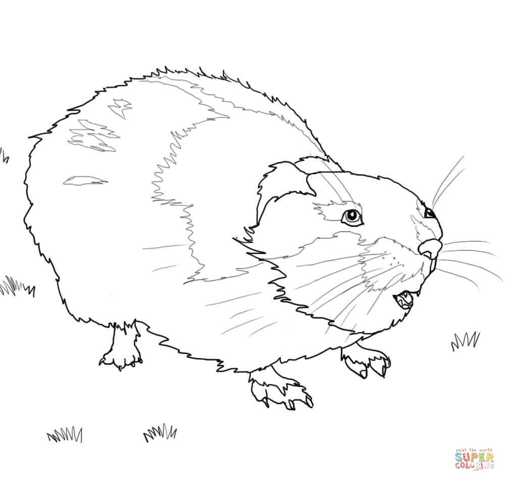 Rodent coloring #6, Download drawings