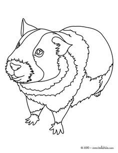 Rodent coloring #2, Download drawings