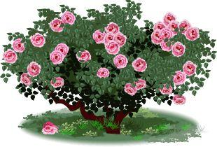 Rose Bush clipart #15, Download drawings
