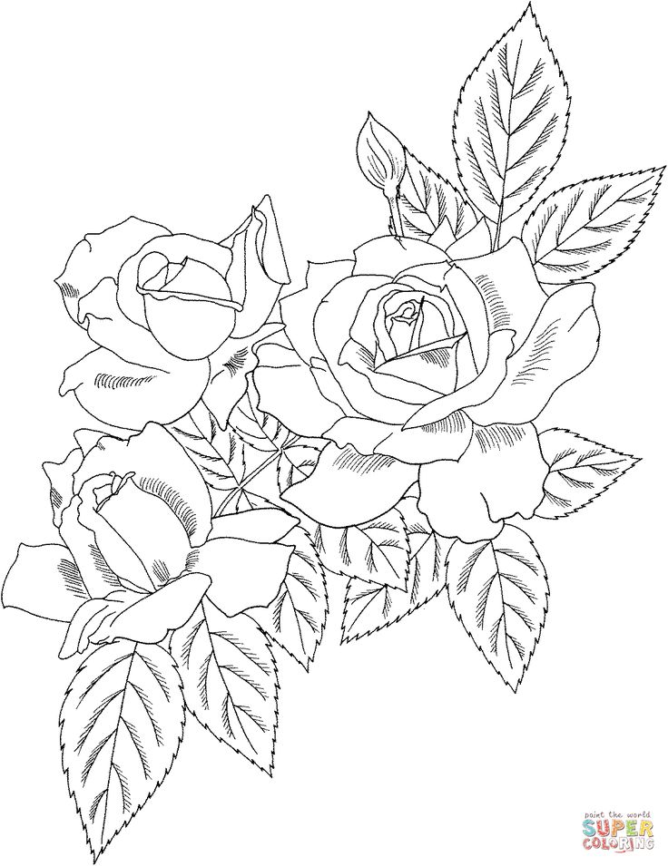 Rose Bush coloring #6, Download drawings