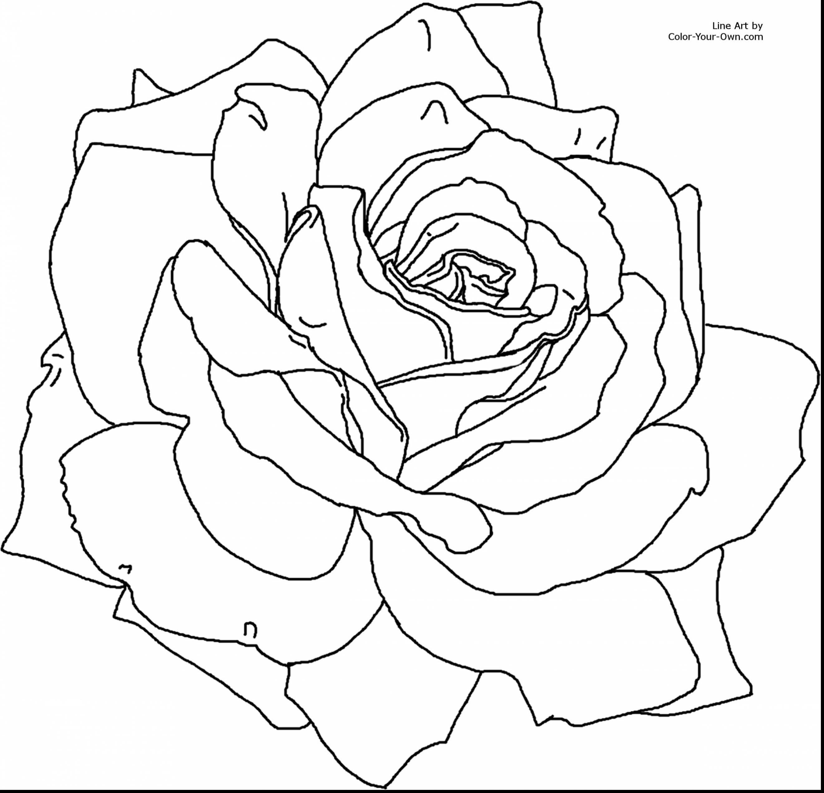 Rose Bush coloring #11, Download drawings