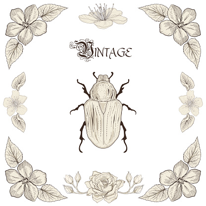 Rose Chafer clipart #8, Download drawings