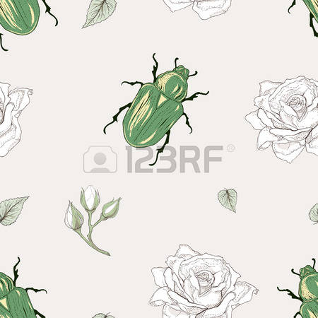 Rose Chafer coloring #19, Download drawings