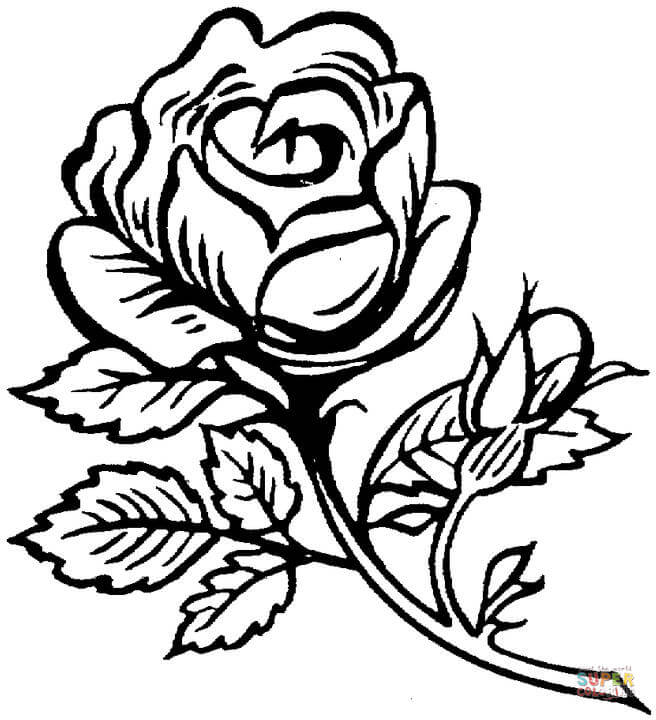 Rose coloring #13, Download drawings