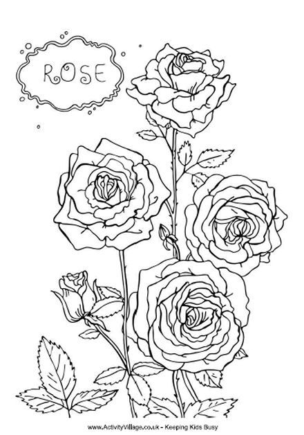 Rose coloring #3, Download drawings