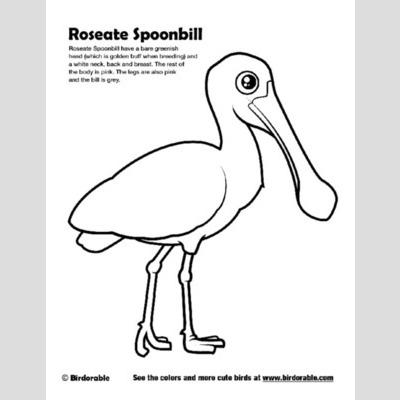 Roseate Spoonbill coloring #19, Download drawings