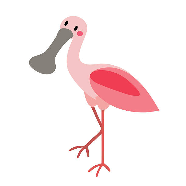 Roseate Spoonbill clipart #3, Download drawings