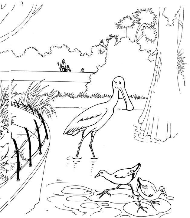 Roseate Spoonbill coloring #10, Download drawings