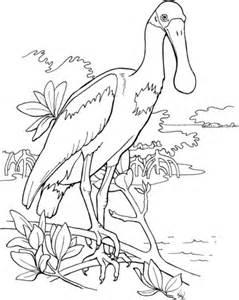 Roseate Spoonbill coloring #17, Download drawings