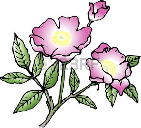 Rose-canina clipart #4, Download drawings