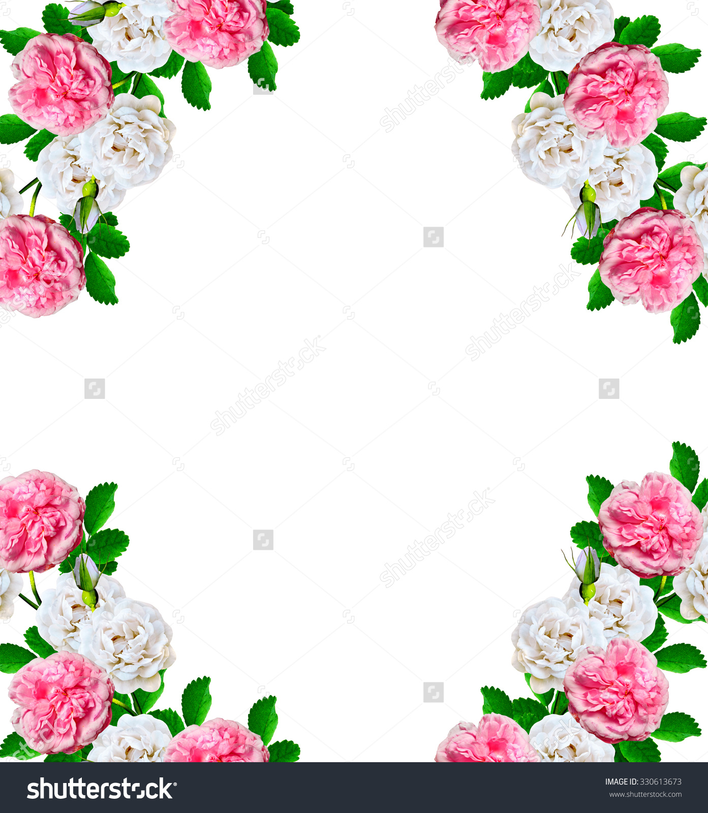 Rose-canina clipart #14, Download drawings