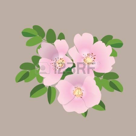 Rose-canina clipart #15, Download drawings