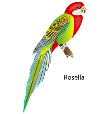 Rosella clipart #16, Download drawings