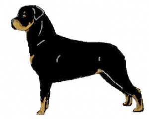 Rottweiler clipart #3, Download drawings