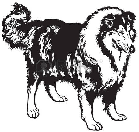 Rough Collie clipart #2, Download drawings