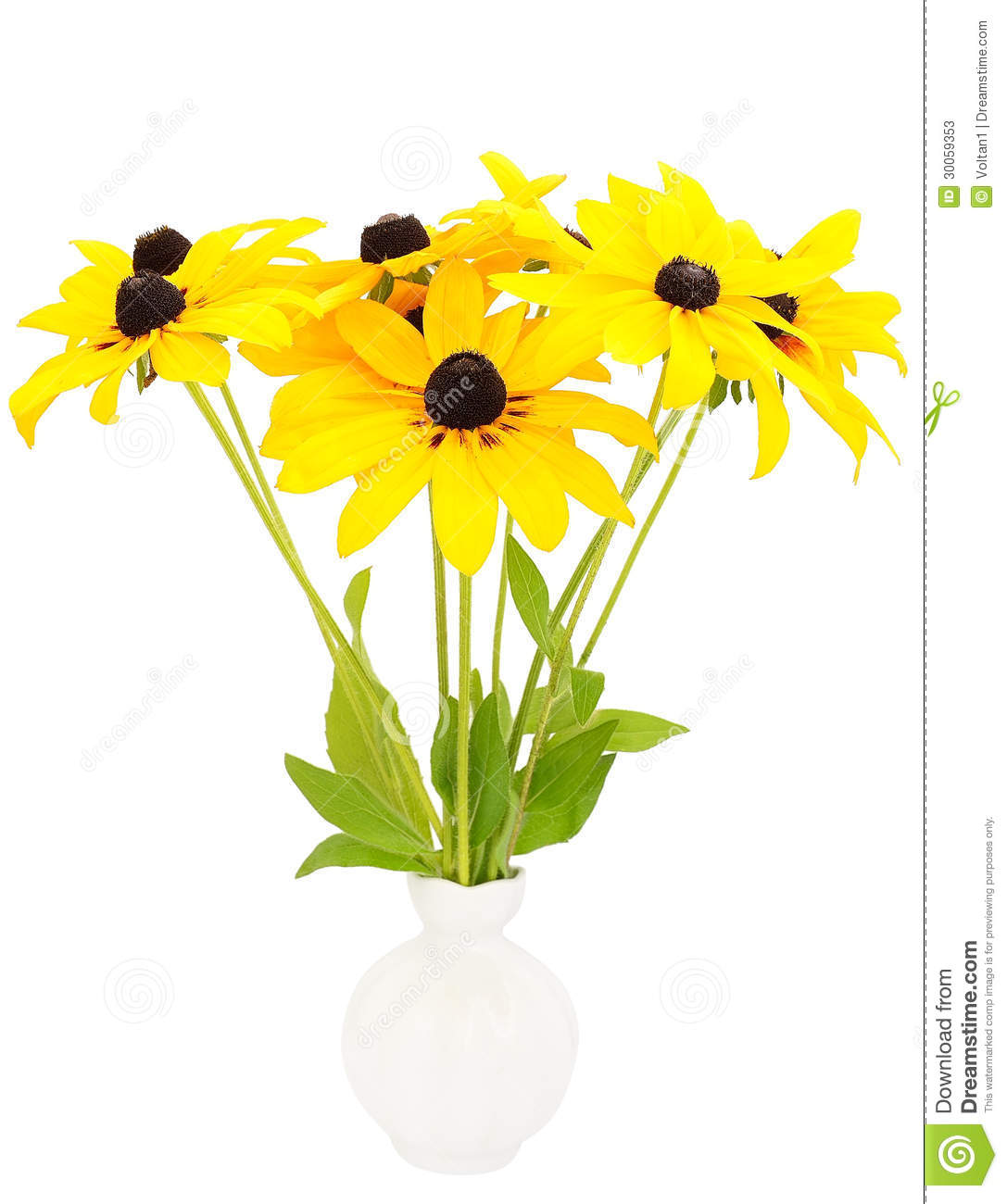 Rudbeckia clipart #19, Download drawings