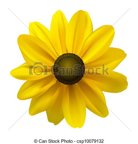 Rudbeckia clipart #12, Download drawings