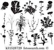 Rudbeckia clipart #3, Download drawings