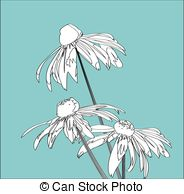 Rudbeckia clipart #6, Download drawings