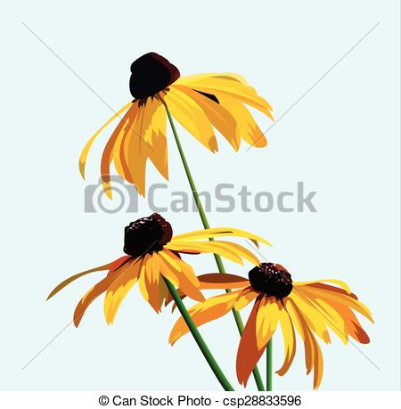 Rudbeckia clipart #20, Download drawings