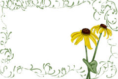 Rudbeckia clipart #17, Download drawings