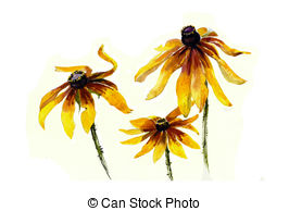 Rudbeckia clipart #15, Download drawings