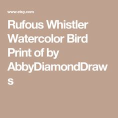 Rufous Whistler clipart #4, Download drawings