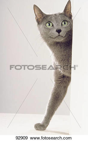 Russian Blue clipart #9, Download drawings