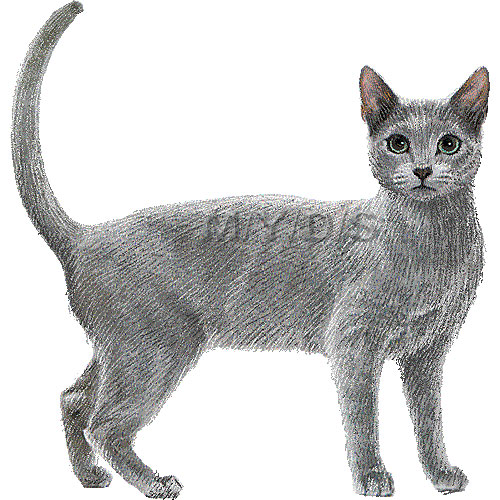 Russian Blue clipart #1, Download drawings