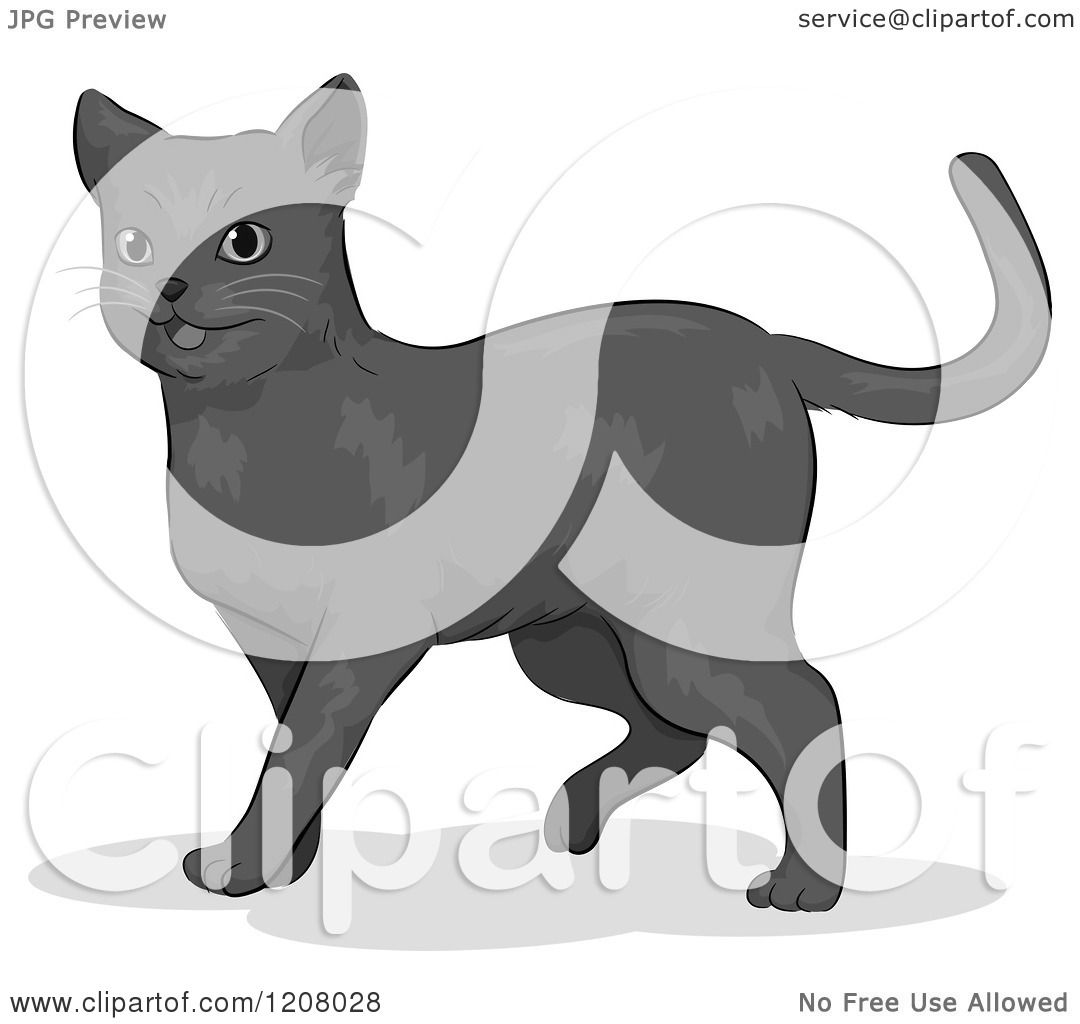 Russian Blue clipart #13, Download drawings
