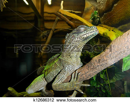 Sailfin Lizard clipart #15, Download drawings