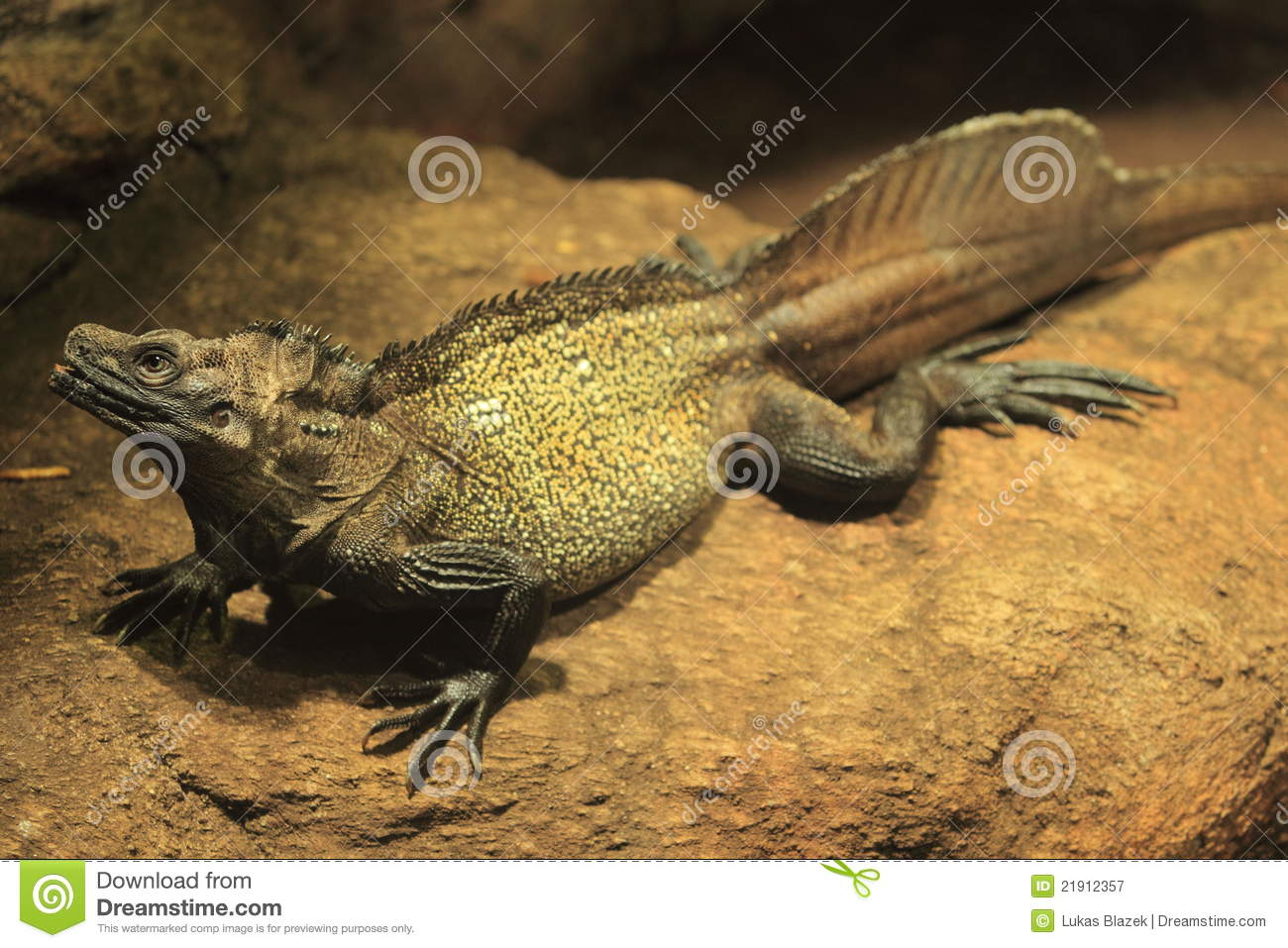 Sailfin Lizard clipart #16, Download drawings