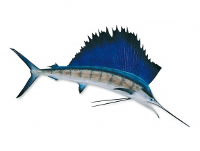 Sailfish clipart #6, Download drawings