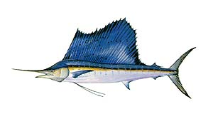 Sailfish clipart #17, Download drawings