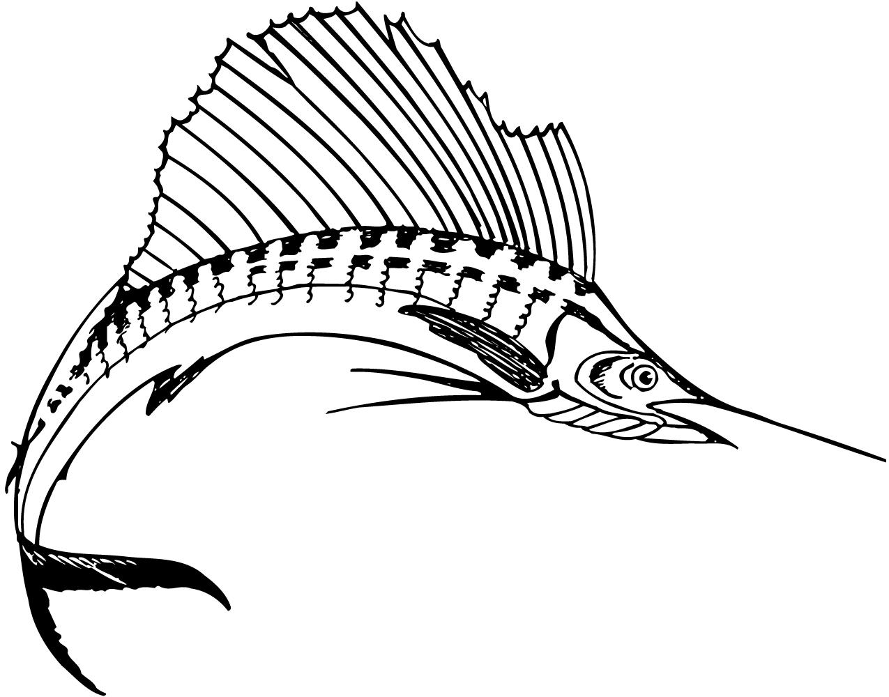 Sailfish coloring Download Sailfish
